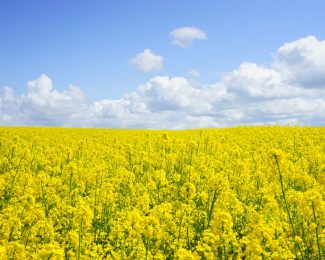 field of flowers, sunny day, simple, easy, relaxed